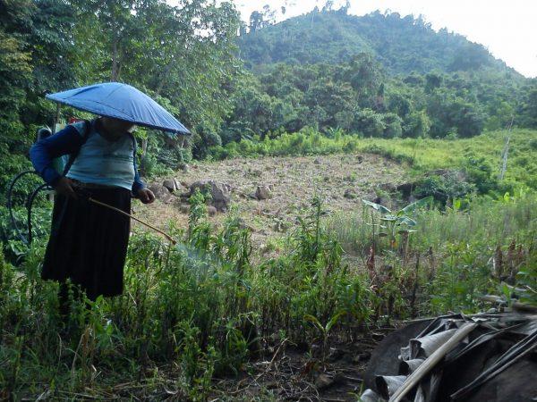 Seorang ibu sedang menyemprot rumput di lahan yang akan dipersiapkan sebagai tempat bercocok tanam. (Foto: Marselina Evy)